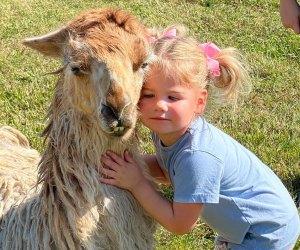 TGR Exotics Wildlife Park llama love hug