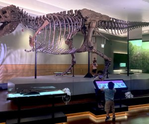 100 Things To Do in Chicago with Kids Before They Grow Up: Field Museum
