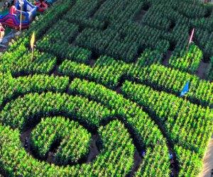 the Best Corn Maze near Los Angeles: Live Oak Canyon