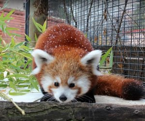 The Best Zoo in Every State: Zoo Boise