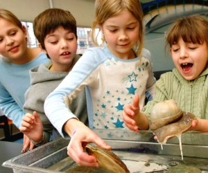 The New England Aquarium mobile tide pools come to the Atrium School this week.