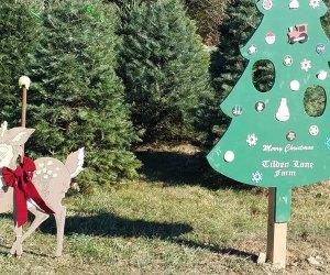 Christmas Tree Farm Tilden Lane Farm