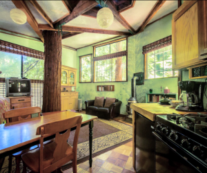 California Vacation Home Rentals for Families: A tree is growing in the middle of the house!