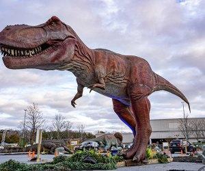 The drive-thru Dino Safari is roaring into Long Island this weekend. Photo courtesy of the Dino Safari