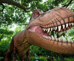 Meet the Big Daddy of dinosaurs at the Zoo's newest exhibit!/Photo courtesy of Stephanie Adams.
