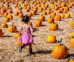 Underwood Farms Pumpkin Patch. Photo courtesy of the farm
