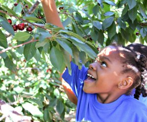 Picking your own makes them taste extra sweet. Photo courtesy of Villa del Sol