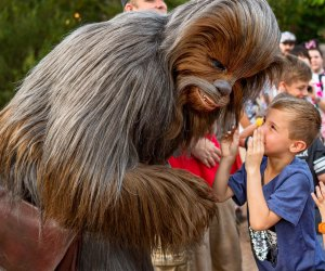 Chewy, we've missed you! Photo by Matt Stroshane courtesy of Walt Disney World