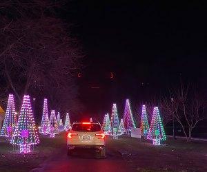 Illuminated Chrismtas trees line Westchester's Winter Wonderland