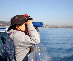 While you probably won't need binoculars to see whales, they're awfully fun!