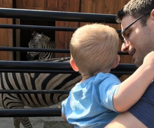 Boy and dad looking at zebras at White Post Animal Farm on Long Island