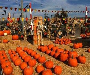 The Best Pumpkin Patches near Los Angeles: Whittier Pumpkin Patch