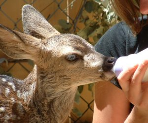 Best Things To Do with Kids in Lake Arrowhead: Wildhaven Ranch
