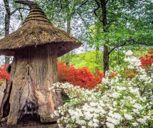 The Tulip Treehouse at Winterthur is a  location right out of The Hobbit. Photo courtesy of Bob Lietch for Winterthur Garden