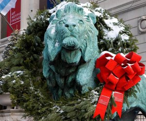 On the day after Thanksgiving, the Art Institute's famous lions put on their holiday outfits as crews place wreaths around their necks. Photo courtesy of the Chicago Art Institute