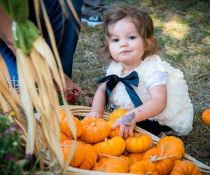 Pumpkin patches are one of the quintessential fun activities for Houston kids in fall