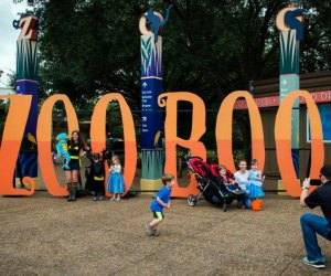 One of our favorite things to do in Houston in October is Zoo Boo. Photo courtesy of houstonzoo.org