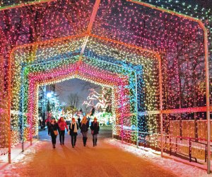 ZooLights at Lincoln Park Zoo. Photo by Julia Fuller