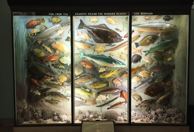 Exhibits at the Vanderbilt Museum's Hall of Fishes show the diversity of local marine life. Photo courtesy of the museum