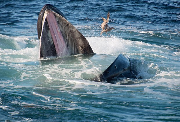Enjoy whale watching off the shores of Long Island