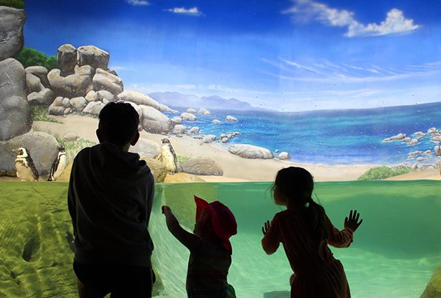 kids looking at penguins at an aquarium