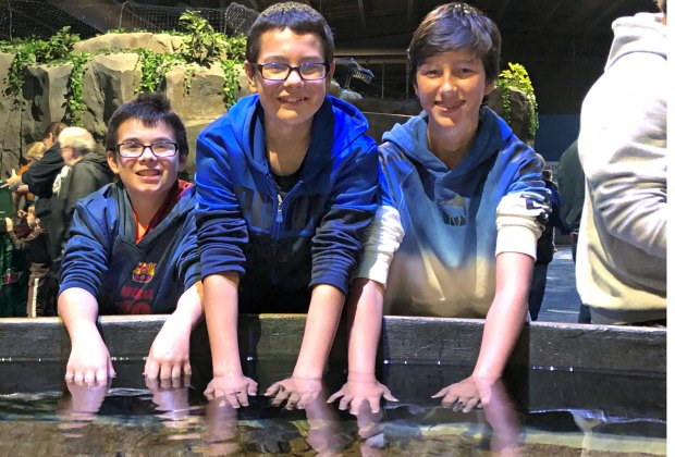 There are four tidal pools for kids to explore. Photos courtesy of Living Shores Aquarium