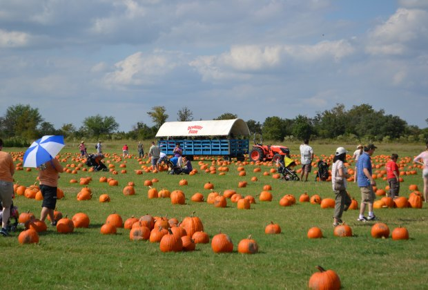 Browse Eight Acres Of Pumpkin Picking Fun At The Farm Photo Courtesy Dewberry