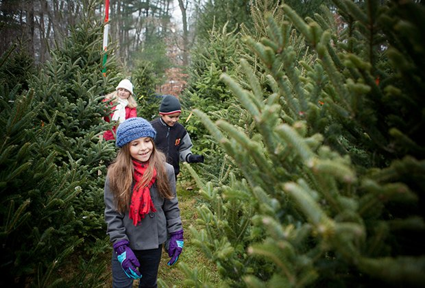 Cut Your Own Christmas Tree Near Me.Cut Your Own Christmas Tree Farms Near Nyc Mommypoppins
