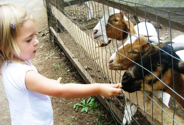 See Baby Animals And More At Family Friendly Nj Farms
