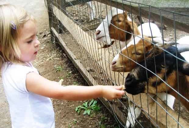 Photo courtesy of Abma's Farm