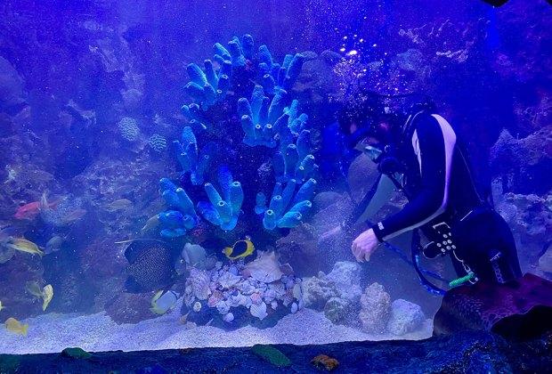 Scuba diver at the Adventure Aquarium a NJ day trip destination