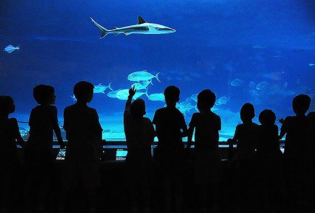 Day Trip to NJ's Adventure Aquarium