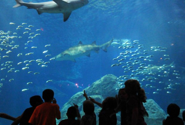 Adventure Aquarium in Camden Offers a Hands-On Experience ...