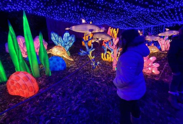Holiday Lights Drive-thru Bronx Zoo Lights