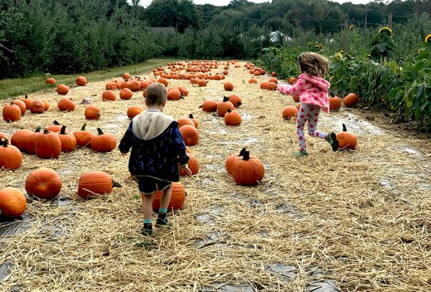 20 Family Friendly Pumpkin Patches In New Jersey Mommypoppins Things To Do In New Jersey With Kids