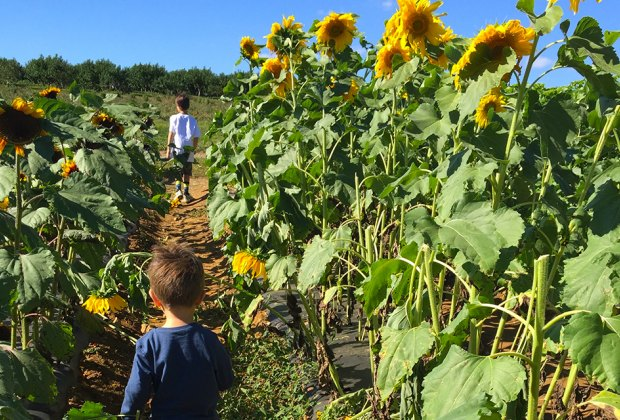 Gorgeous Sunflower Fields And More Pick Your Own Flowers In Nj Mommypoppins Things To Do In New Jersey With Kids