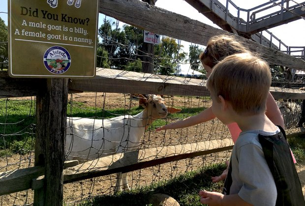 See Baby Animals At Petting Zoos And Family Farms In Nj Mommypoppins Things To Do In New Jersey With Kids