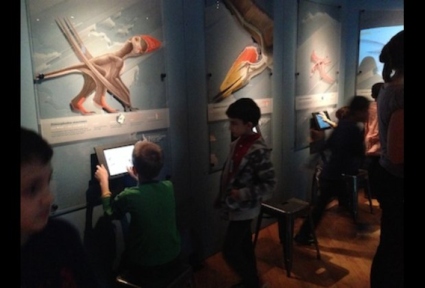 Interactive touch-screens invite visitors to learn more about pterosaurs