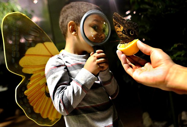 Visit the astonishing world of butterflies at the Butterfly Conservatory at the AMNH. Photo courtesy of the museum
