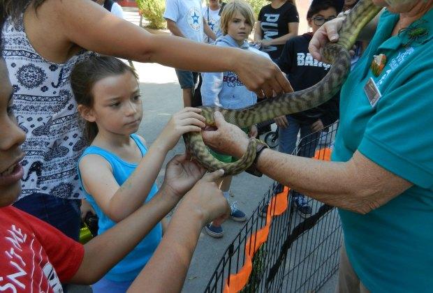 animal encounter!