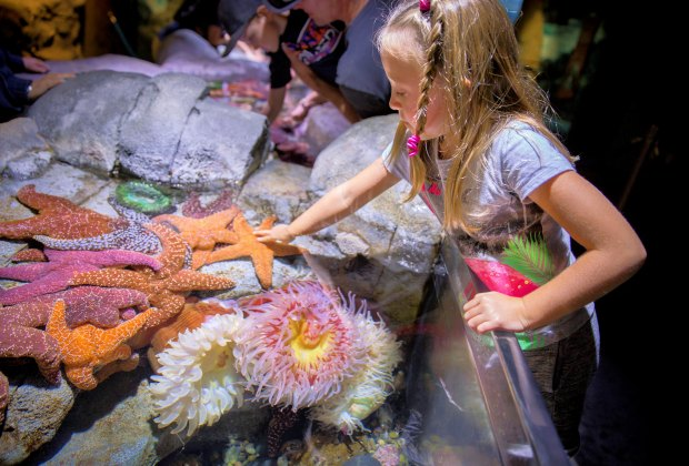 Kids get interactive with animals at the Aquarium of the Pacific.