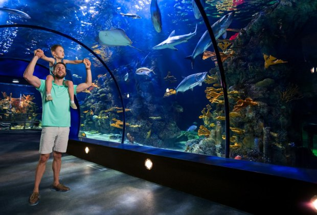 aquarium father and son on sholders raised hands at caribbean tunnel f - Moody Gardens Palm Beach Birthday Party