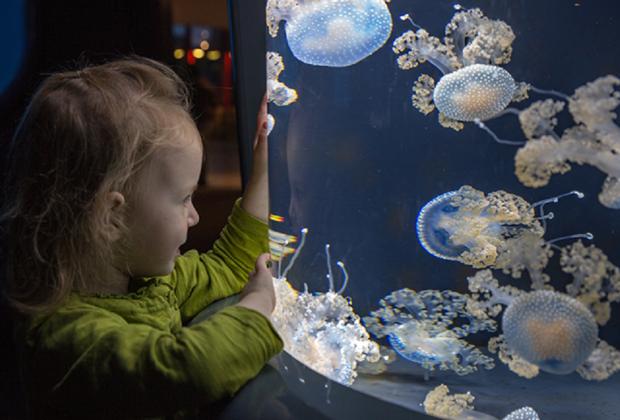 Photo courtesy of the National Aquarium