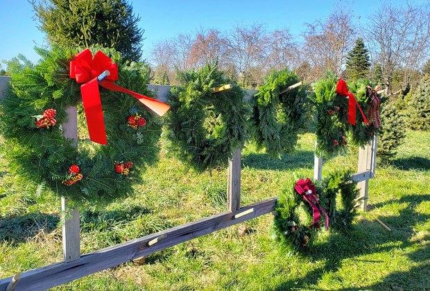 Barclay's  Tree Farm Christmas Tree Farms Near NYC