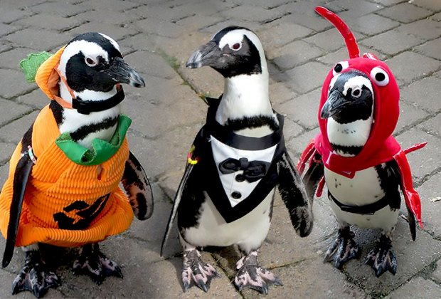 penguins in halloween costumes long island aquarium