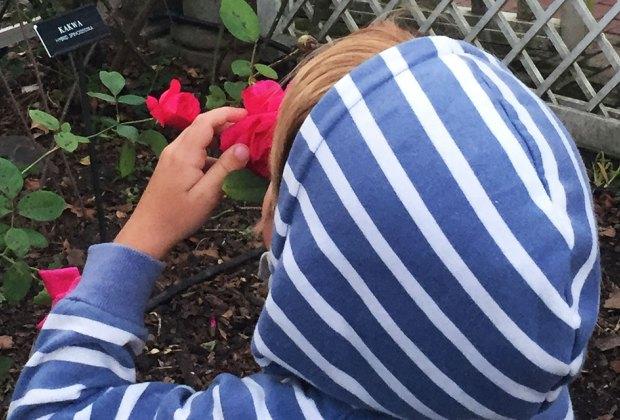 Cranford Rose Garden at Brooklyn Botanic Gaden