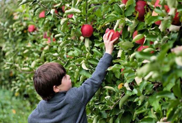 17 Places to Go Apple Picking—and More—Near Boston