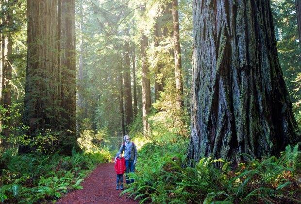 12 Best California Family Vacation Ideas Kids Love