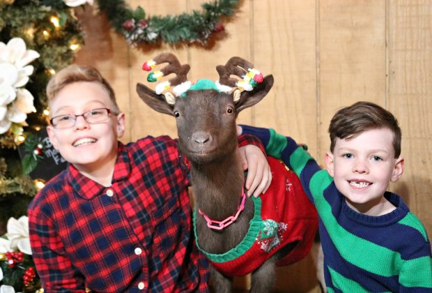 Strike a pose with a goat for this year's holiday card. Photo courtesy of Bradley Mountain Farm