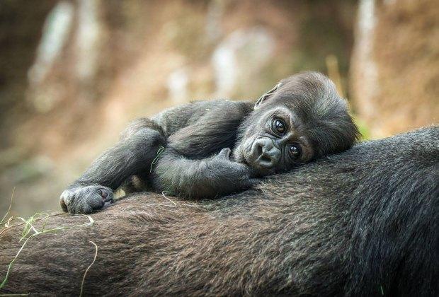 See Bronx Zoo Like a Local: Top Tips